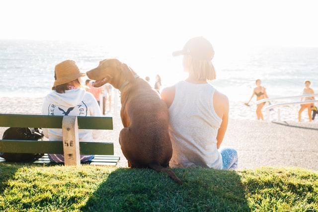 夏の海と犬